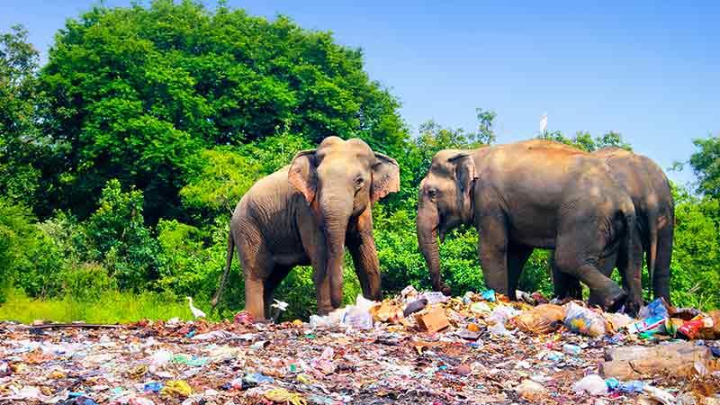 salvare-pianeta-dalla-plastica